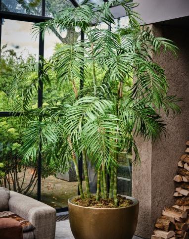 Palm in verschillende maten.