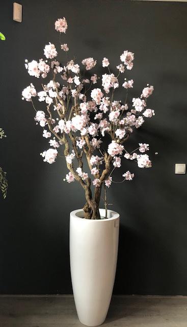 Bloesemboom Annefleurs! Prijs excl. pot