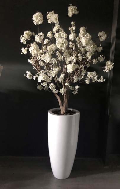 Bloesemboom luxury white, 120 hoog.