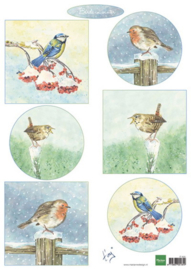 IT605 Tiny's  birds in winter