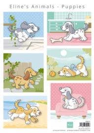 AK0079 Eline's animals puppies