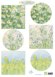 IT601 Tiny's flower meadow 1