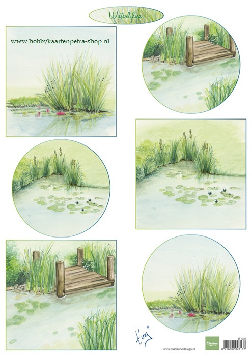 IT593 Tiny's Waterlilies