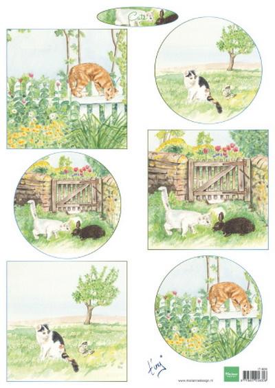 IT609 Tiny's cats