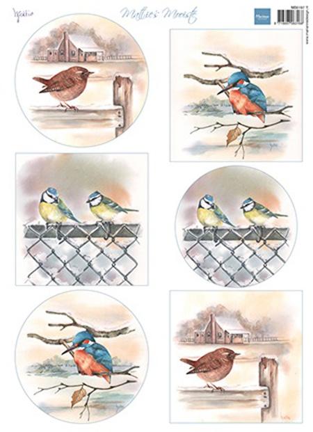 MB0197 - Mattie's mooiste Birds in winter