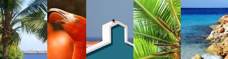 Banner Coral Estate.jpg