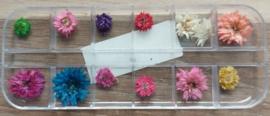 12 vaks Doosje Droogbloemen
