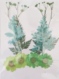 Groen / Blauw