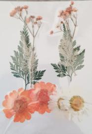 Oranje / Wit