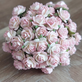 White - Pink Edge