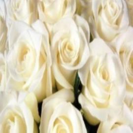 Geurolie Witte Roos - BB184 voor gietzeep