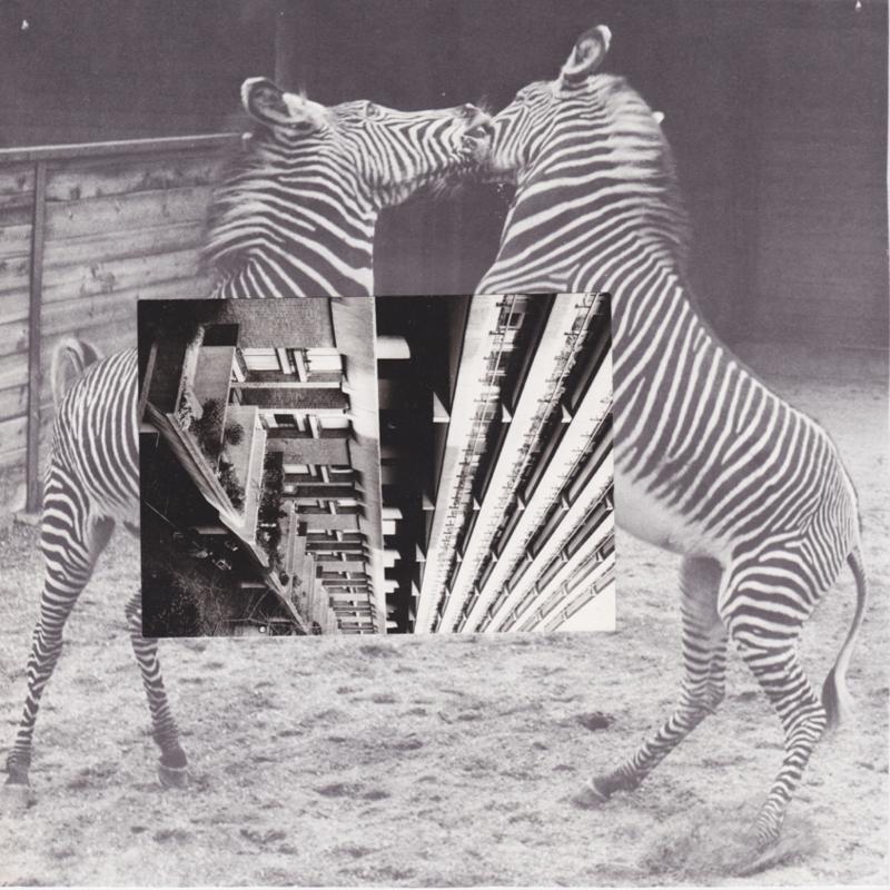 Zebra *SOLD*