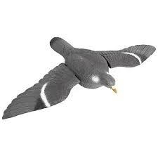 Lokduif met gespreide vleugels