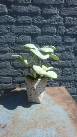 Fake Plant 33cm