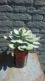 Fake Plant 23cm