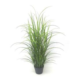Half hoge grasplant 33x33x80 cm