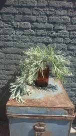 Fake Plant 61cm