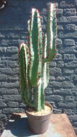 Fake Cactus 76cm