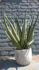 Fake Cactus 50cm