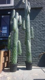 Fake Cactus 183cm