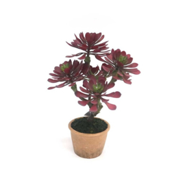 plant 39,5 cm