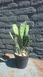 Fake Cactus 32cm