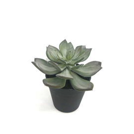 Fake vetplant 16,5x16,5x16,5 cm