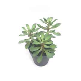 Fake vetplant 18x18x22 cm