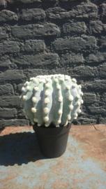 Fake Cactus 25,5cm