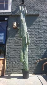 Fake Cactus 255cm