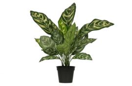 Kunstplant Aglaonema groen 50 cm