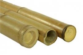 bamboestam 115 cm. diameter 6 cm.