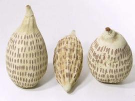 Baobab Drop 20-30 cm. per stuk
