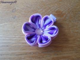 Lintbloem, lila, met lichtroze en paars/lila bloem.
