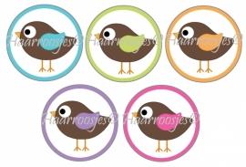 Vogeltjes 002