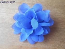 Haarbloem, blauw.