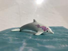 Dolfijn jong