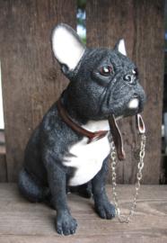 beeldje Franse Bulldog met riem zittend zwart