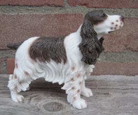 beeldje Engelse Cocker spaniel bruin-wit