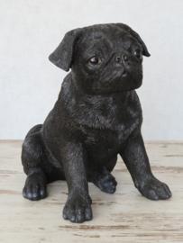 beeld Mopshond zwart zittend | 26 cm