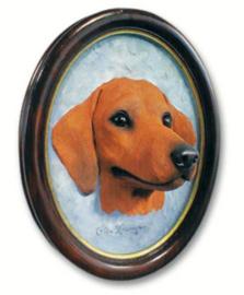 portret/kop Teckel rood