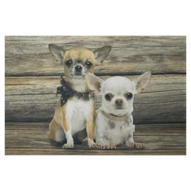 deurmat Chihuahua korthaar