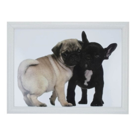 schootkussen Mopshond en Franse Bulldog puppy's