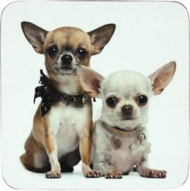 onderzetters Chihuahua korthaar