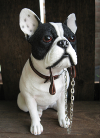 beeldje Franse Bulldog met riem zittend wit