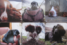 onderzetters jachthonden