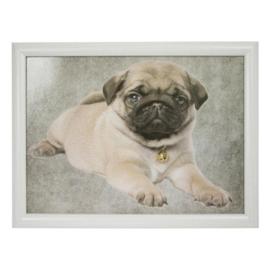schootkussen Mopshond puppy