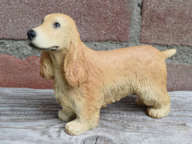 beeldje Engelse Cocker spaniel blond