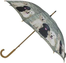 paraplu Labrador puppy's