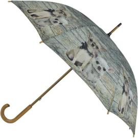 paraplu Chihuahua korthaar